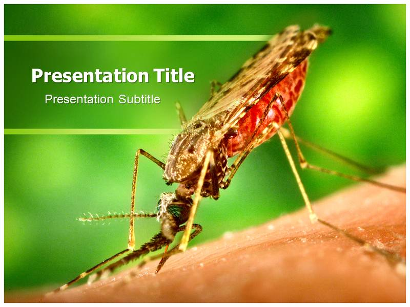 Malaria Prophylaxis PowerPoint Templates and Backgrounds