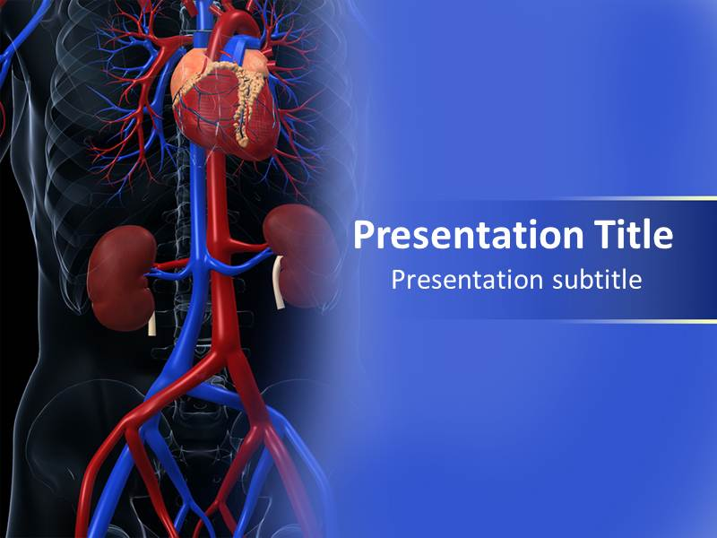 cardiovascular powerpoint template free - cardiovascular system picture powerpoint templates and