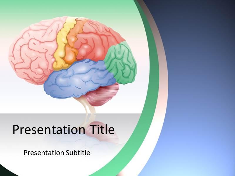 Brain Anatomy PowerPoint Template Background of Function Parts – Brain Powerpoint Template