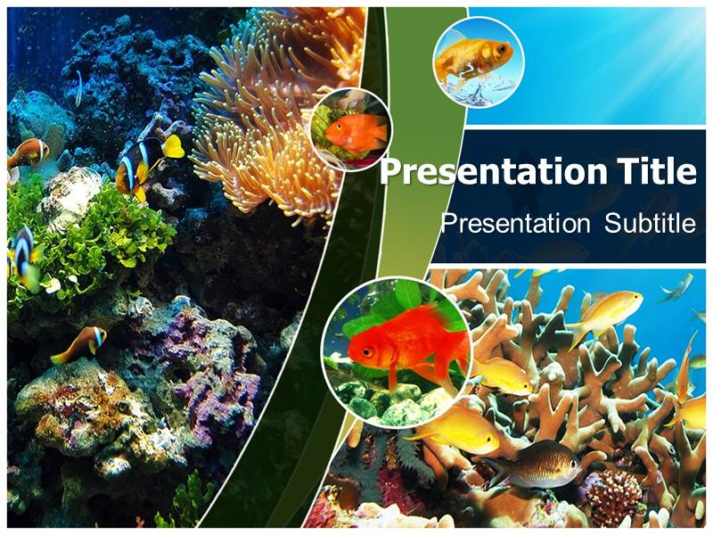 Reef Calendar Wallpaper : Coral reefs powerpoint templates and backgrounds
