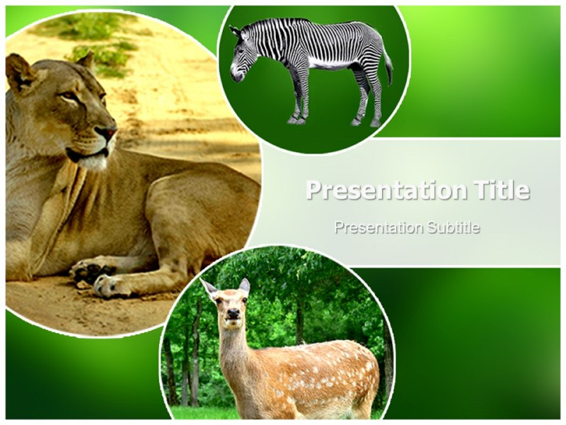 Zoo animals powerpoint templates and backgrounds download toneelgroepblik Images