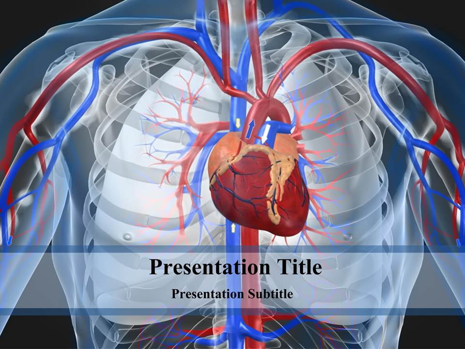 cardiovascular system powerpoint templates and backgrounds, Modern powerpoint
