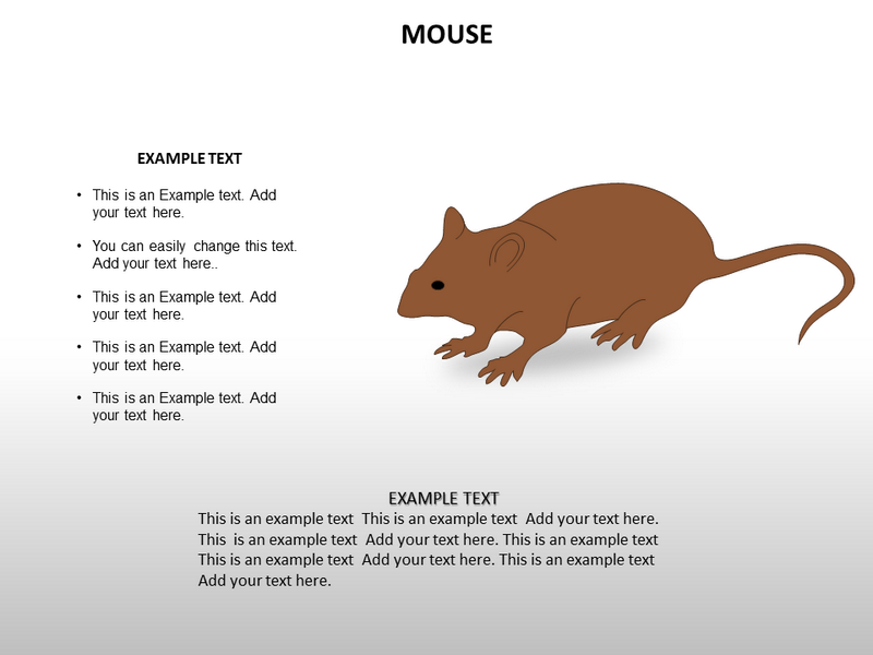 Animal biology powerpoint templates and backgrounds download toneelgroepblik Images