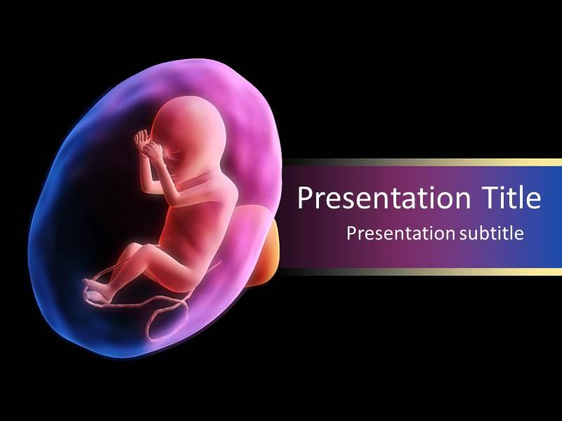Fetus development powerpoint templates ppt backgrounds slides download toneelgroepblik Image collections