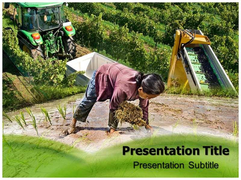 Powerpoint templates free download agriculture gallery asian agriculture powerpoint templates and backgrounds download toneelgroepblik gallery toneelgroepblik Choice Image