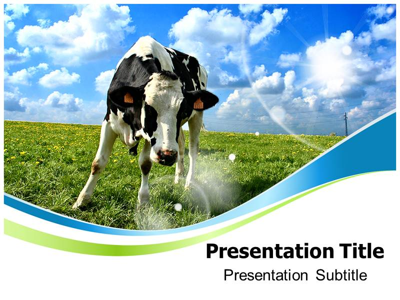Cow photo powerpoint templates and backgrounds download toneelgroepblik Images