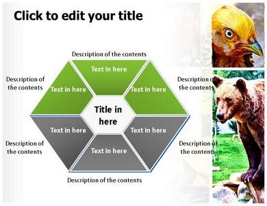 Zoology powerpoint templates and backgrounds toneelgroepblik Images