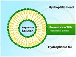 Liposome Templates For Powerpoint