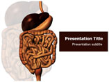 Digestive System Picture Templates For Powerpoint