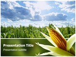 Corn Templates For Powerpoint