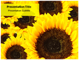 Flowers Cards Templates For Powerpoint