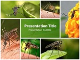 Mosquitoes PowerPoint Graphics