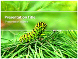 Caterpillar Picture Templates For Powerpoint
