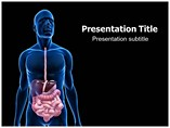 Digestive System PowerPoint Backgrounds