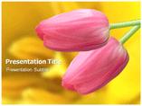 Tulip Calvinism