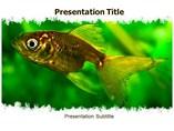 Aquarium Fish Templates For Powerpoint