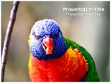 Muticoloured Bird Templates For Powerpoint