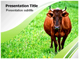 Animal powerpoint templates-Cow