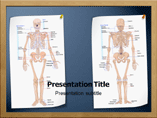 Skeletal System Anatomy Templates For Powerpoint