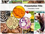 Animal Tissue Templates For Powerpoint