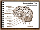 Brain Modification Templates For Powerpoint