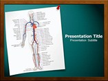 Circulatory System Templates For Powerpoint