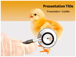 Diseases Of Poultry Templates For Powerpoint