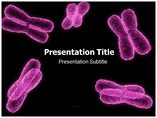 Chromosome Templates For Powerpoint