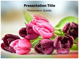 Tulip Templates For Powerpoint