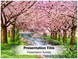 Cherry Blossom Pictures Templates For Powerpoint