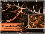 Neuron Anatomy Templates For Powerpoint