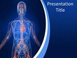Human Vascular System PowerPoint Template