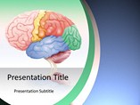 Brain Anatomy Diagram Templates For Powerpoint