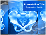 Pelvis  X Ray Templates For Powerpoint
