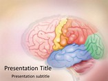 Medical Brain Templates For Powerpoint