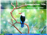 Beautiful Bird Templates For Powerpoint