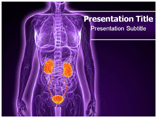 Urology Templates For Powerpoint