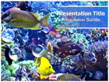 Fresh Water Fish Templates For Powerpoint