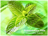 Mint Templates For Powerpoint