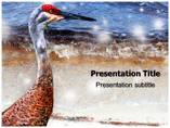 Siberian birds Templates For Powerpoint