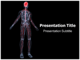 Human Nervous System Templates For Powerpoint