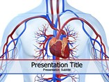Cardiovascular System Diagram Templates For Powerpoint