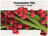 Staphylococcus Symptoms Templates For Powerpoint