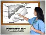 Liver anatomy Templates For Powerpoint