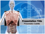 Thorax Templates For Powerpoint