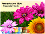 Flowers Gallery Templates For Powerpoint
