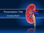 Human Kidney Template PowerPoint, Human Kidney PowerPoint Background Templates