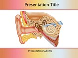 Ear Anatomy Templates For Powerpoint