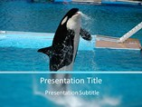 Killer Whale Template PowerPoint