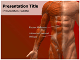 Abdominal Muscles Templates For Powerpoint